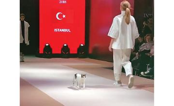 A cat on the catwalk!