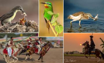 Pakistani wildlife photograph wins Best of Nation Award at the World Photographic Cup 2019