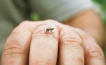 Prevention and Control of Dengue Fever