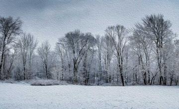Silent Snow, Secret Snow!