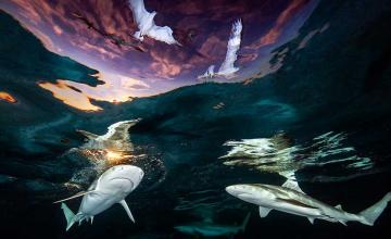 Woman becomes first female Underwater Photographer of the Year with daring shot of circling sharks