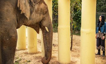 Watch the story of Kavaan in an all new emotional documentary Cher & The Loneliest Elephant