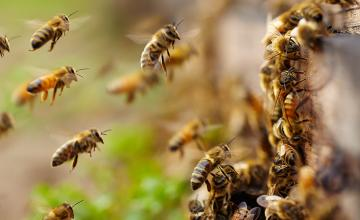4 people, including teen, injured following bee attack in Arizona Park