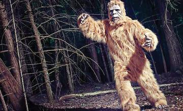 Pair of Bigfoot creatures spotted by hunters who were paralysed with fear